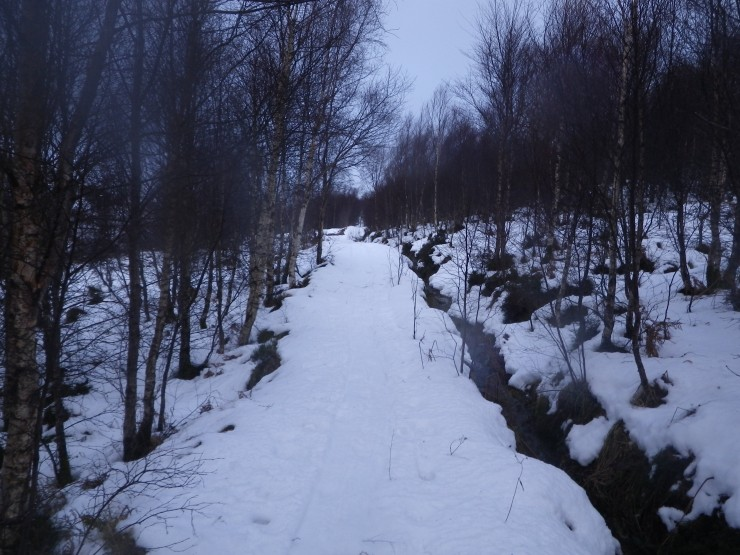 Still cover on main path above first steepening and the birch trees