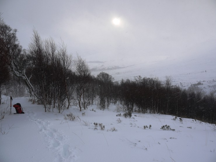 This is the path up Coire Ardair just where the juvenile birch ends.