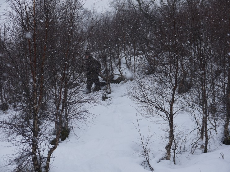 Ross, one of the SNH stalkers, in the scrub birch retrieving a kill.