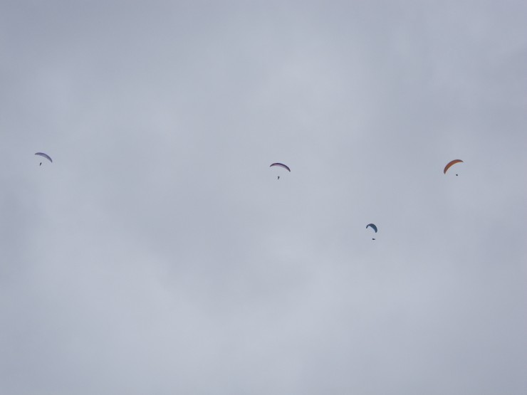 About 10 wings in action some off Cairn Liath , some from Sron a Ghoire - lift on both sides looked good....