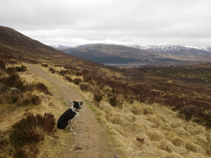 For the declared Dog 'Fans' out there - the happy homeward stroll NB No canines harmed in the making of this Blog!)
